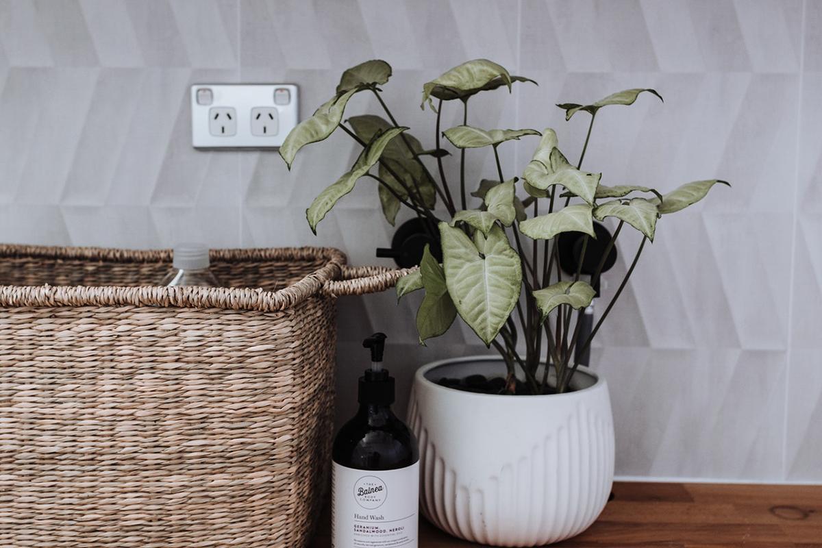 squarerooms pexels rachel claire plant basket bottle wine sockets electrical points