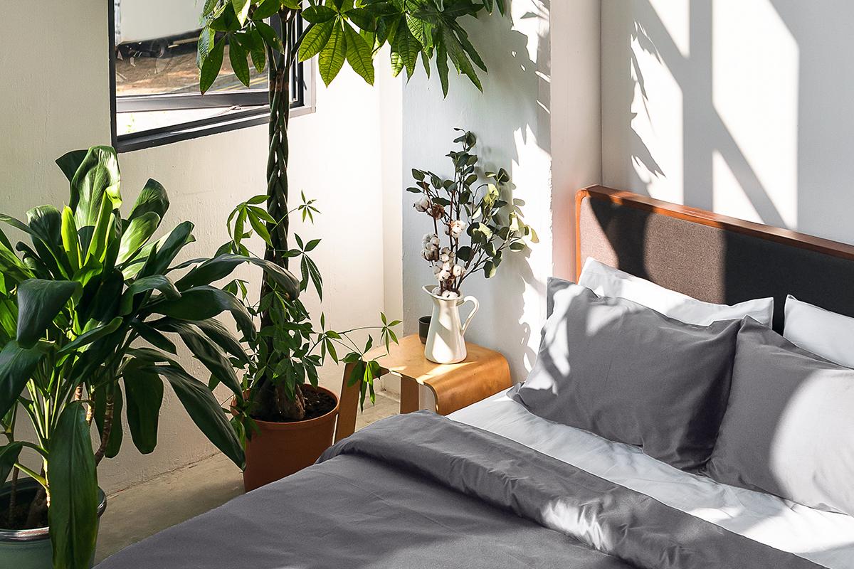 squarerooms SOJAO bedroom grey white green plant tree