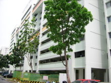 Tampines Street 24 photo thumbnail #9