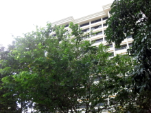 Hougang Street 61 photo thumbnail #19