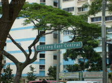Geylang East Central thumbnail photo