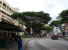 Jurong West Avenue 1 thumbnail photo