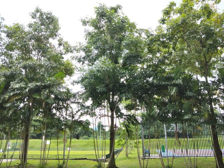 395 Bukit Batok West Avenue 5