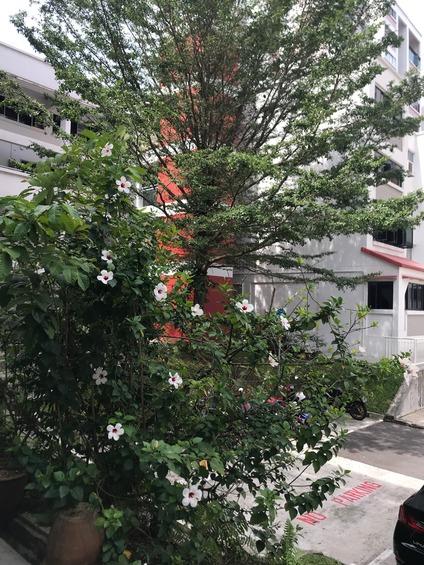 214 Bukit Batok Street 21
