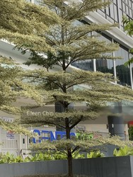 Centropod @ Changi photo thumbnail #3