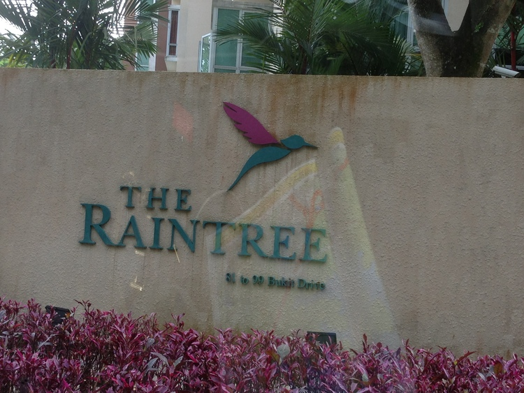The Raintree photo thumbnail