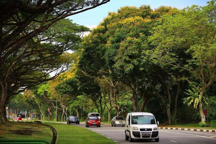 Singapore beats 16 cities in green urban areas