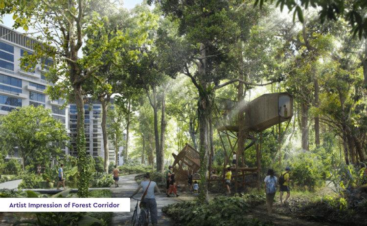 forest corridor 01