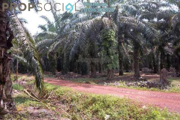 Agricultural land oil palm tree land jempol negeri sembilan jempol iproperty 1 1607 26 iproperty com 162086 egav4wozavz 1phu6adu small