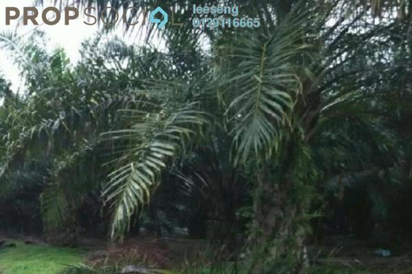Teriangtriang road side 1500 acres oil palm freeho uk8rqzia1msqmucjs2bx small
