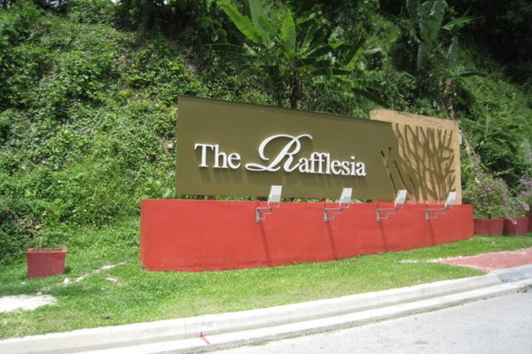 The Rafflesia's cover picture