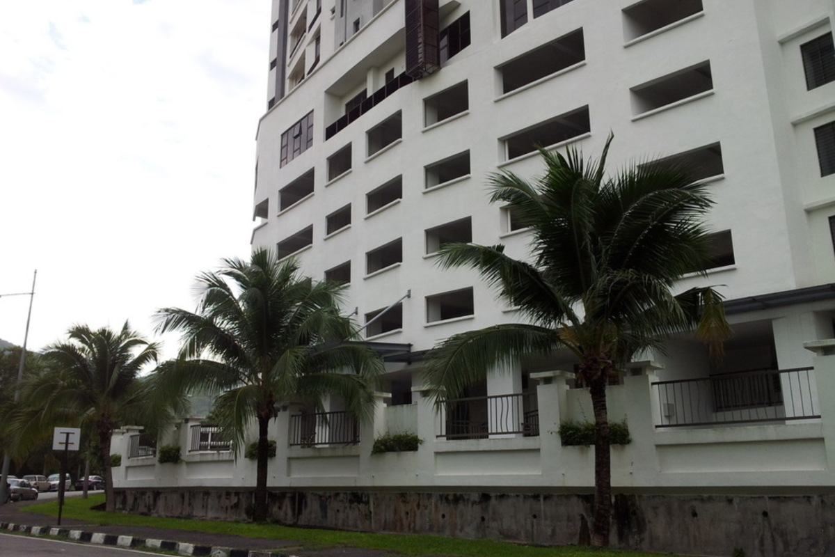 Palm Palladium Photo Gallery 6