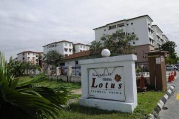 Lotus Apartment's cover picture