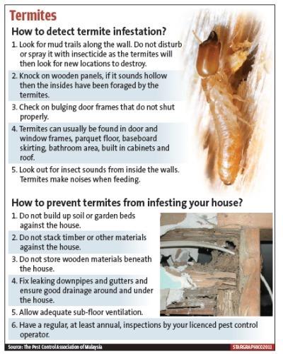 M termites large