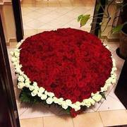 Roses small