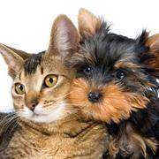 Pet hair small