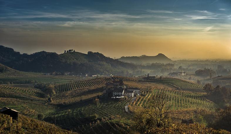 Vinery Veneto