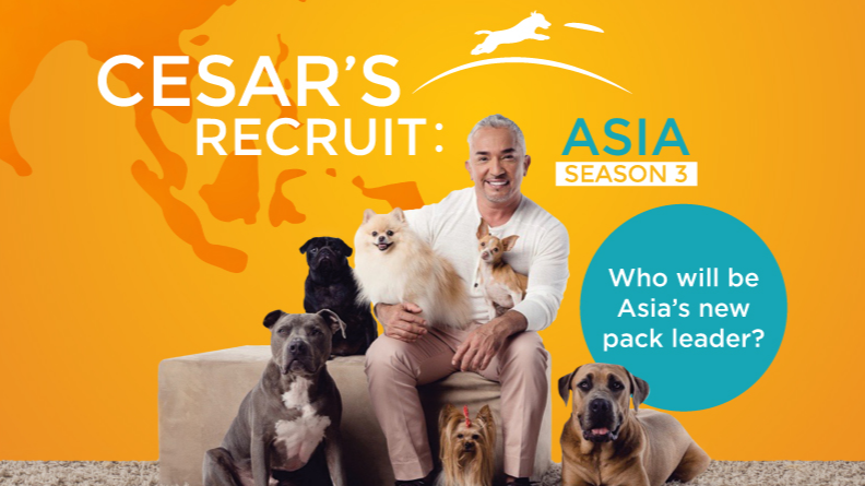 全球知名馴犬師西薩米蘭強勢回歸熱情招募亞洲接班人