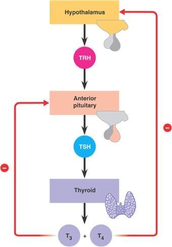 Mechanism of Hormones