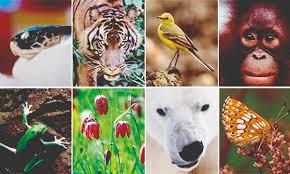 Biodiversity in Plants and Animals