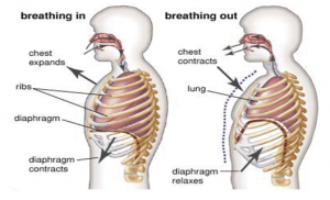 Breathing - Inhalation & Exhalation