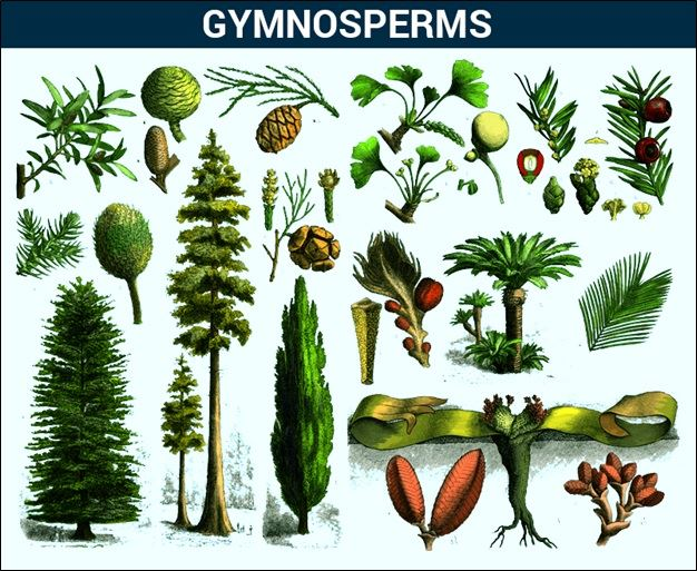 introduction to the angiosperms Angiosperms: introduction / 57 please wait - loading angiosperm: introduction flash cards 8 1 0 bio2137 angiosperms plants created by.