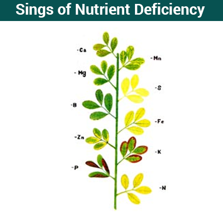 Micronutrients List Of All Essential Micronutrients For Plants