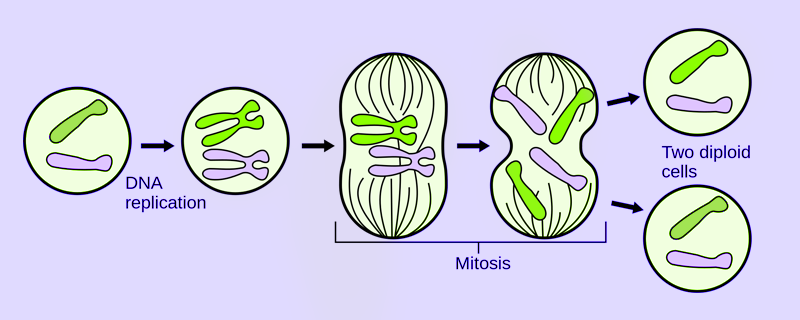 Asexual Reproduction on Parent Group