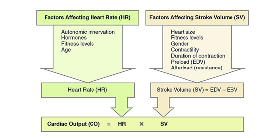 heart rate and cardiac output relationship test