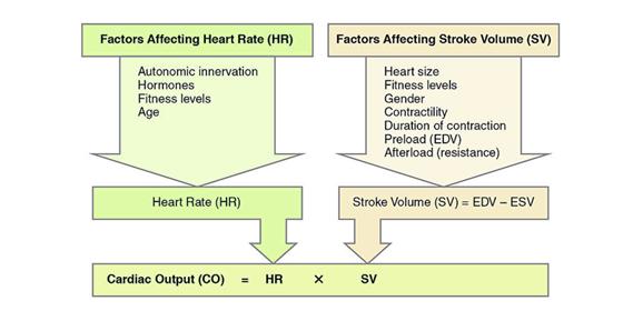 Cardiac Output Formula