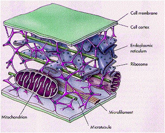 What is a membrane