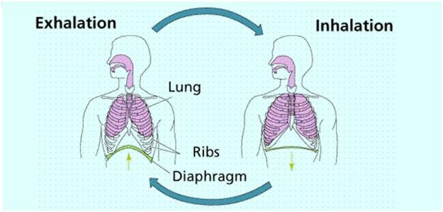 Respiration Definition Types Phases Process And Its Equation