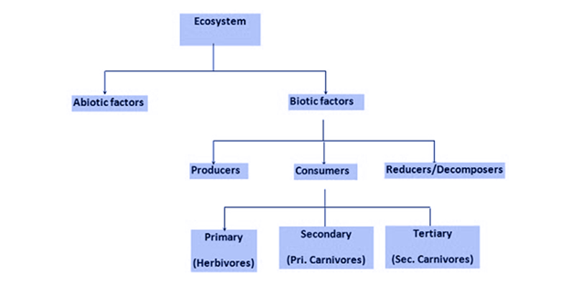 Diagram Of Abiotic Factors Include What Diy Enthusiasts Wiring