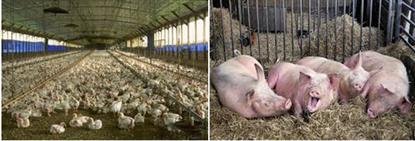 Animal Husbandry Farm