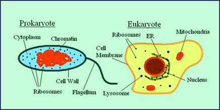 Microbiology all about microorganisms and its different branches useful microorganisms ccuart Choice Image