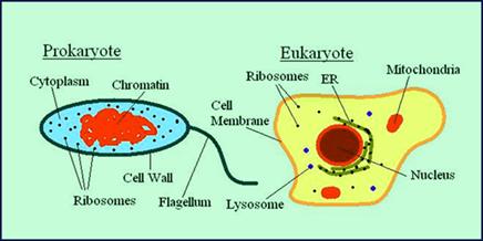 Useful Microorganisms