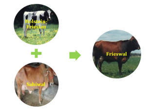 animal husbandry cattle farming and farm management