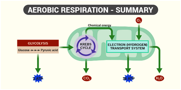 Respiration In Plants - Respiration in Roots, Stem and in ...