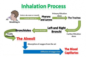 Inahalation Process