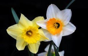 Epigynous flowers