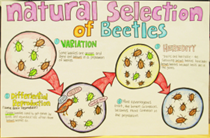 Is Natural Selection A Factor Or Theory
