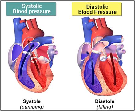 Systolic and Diastolic