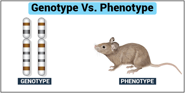 Genotype and Phenotype-Introduction, its Differences and ...