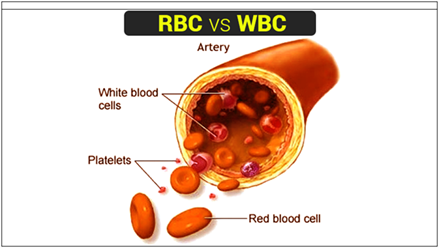 RBC and WBC