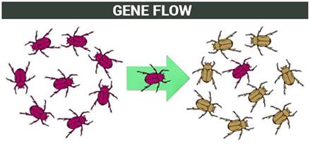 Gene Flow   Theories of Evolution   Factors Affecting Gene ...