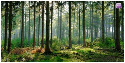 Forest Biodiversity