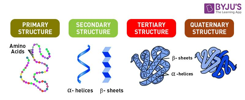 Proteins An Overview of its Structure Functions and Synthesis Protein Structure Pictures