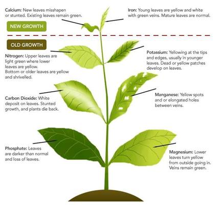 Deficiency in Plants