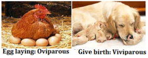 Oviparous and Viviparous