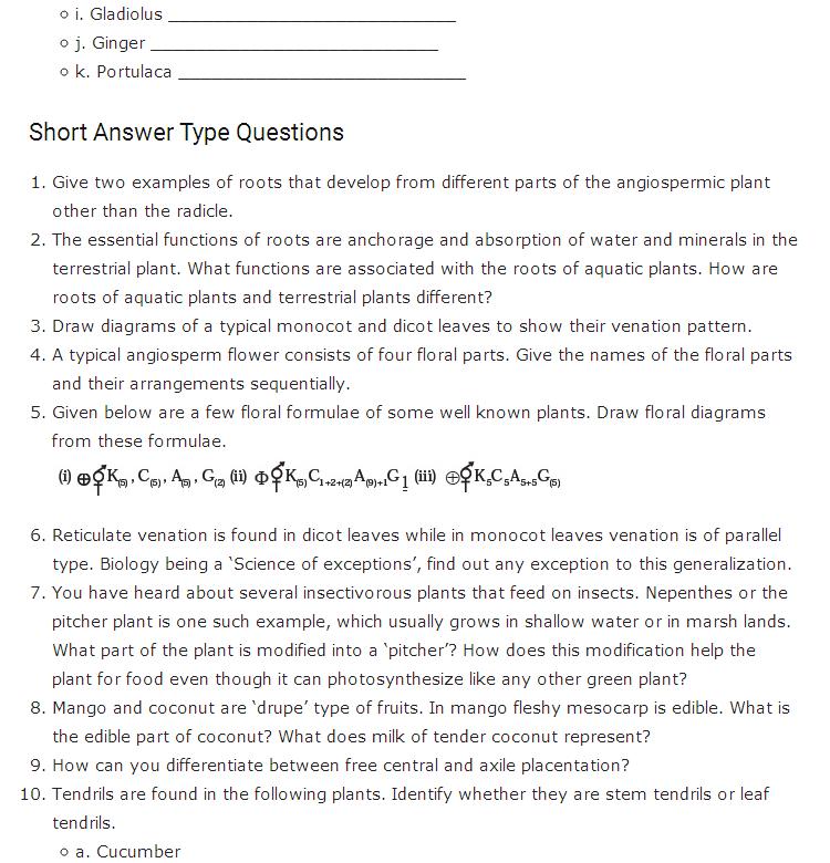 Important Questions Class 11 Biology Chapter 5 Morphology Flowering Plants Part 2